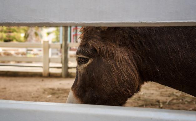 В глазах маленькой лошади, которая кажется печальным и обеспокоенным умом.