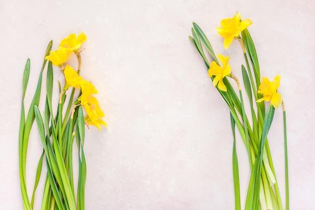 黄色い水仙の春の花