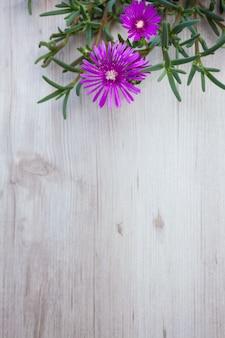木材の背景にランプランサス(アイスプラント)花