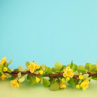 春の開花メギの枝