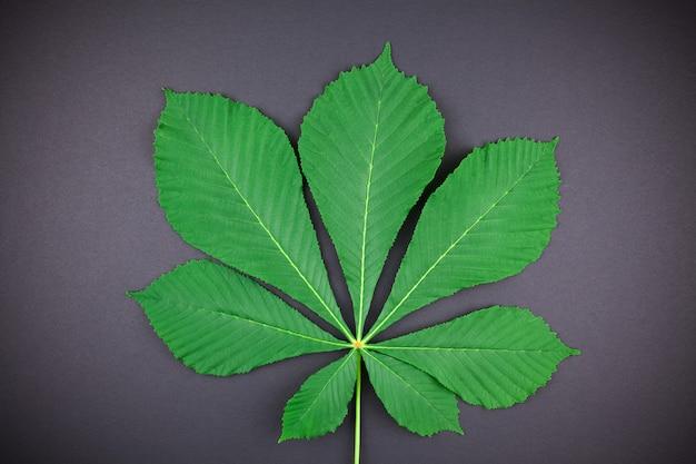 新鮮な緑の栗の葉のパターン