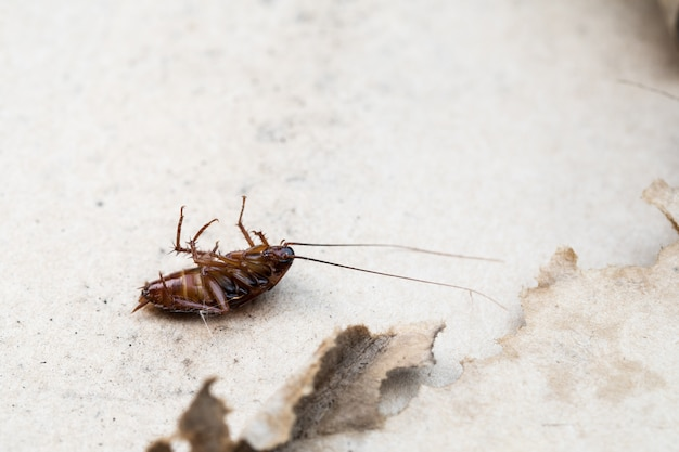 床の上のゴキブリ死