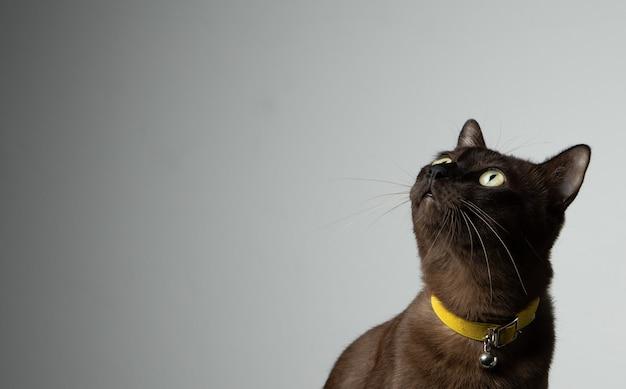 Коричневый кот сидит