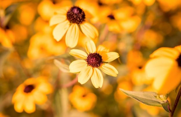 明るくカラフルなオレンジ色の夏の花。