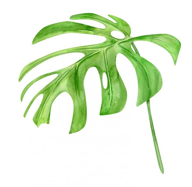 緑のモンステラの葉。熱帯植物。手描きの水彩イラストが分離されました。リアルな植物アート。生地、招待状、服、その他のデザイン要素