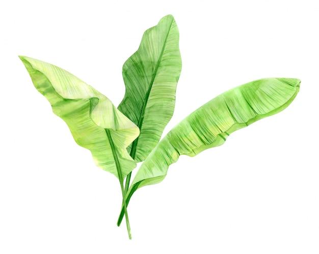緑のヤシの葉の花束。熱帯植物。手描きの水彩イラストが分離されました。リアルな植物アート。生地、招待状、服、その他のデザイン要素