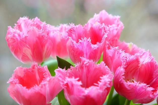 花瓶に春のチューリップ