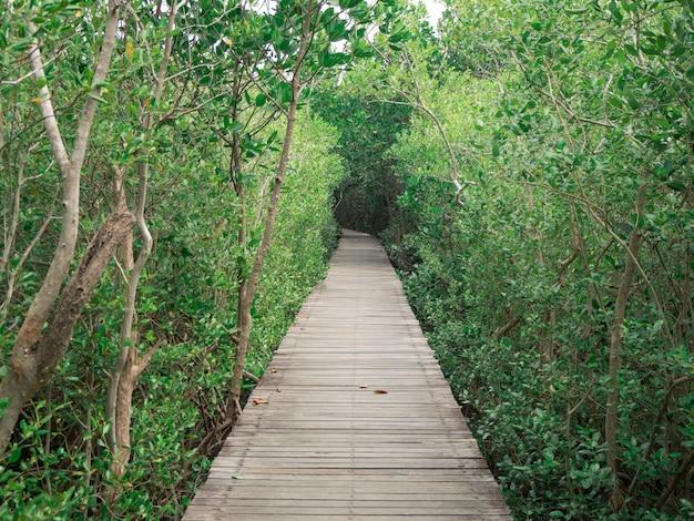 マングローブ林、ペッチャブリー、タイの木の橋の眺め