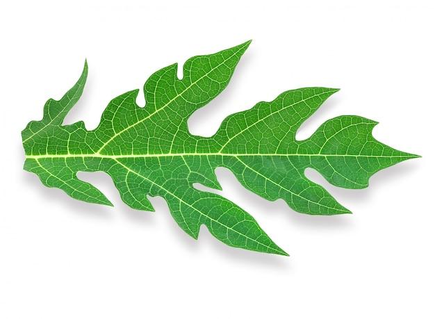 Лист папайи изолирован