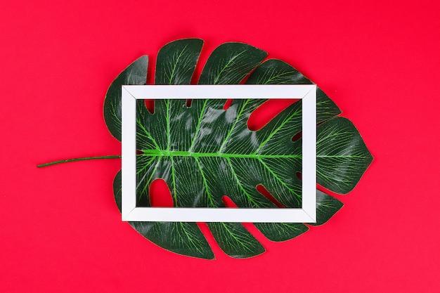 夏のアイデアコンセプト熱帯の葉、白地に赤の背景、上面コピースペースに黒の枠