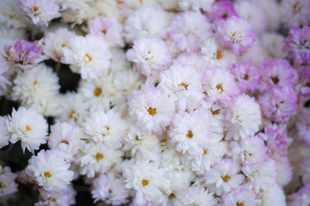抽象的な背景の花のフルカラー