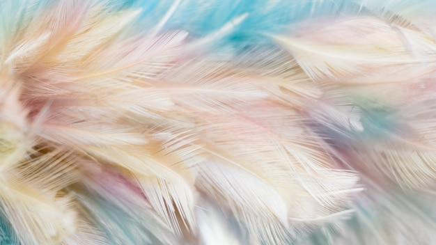 Абстрактное перо для фона