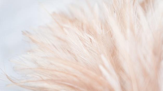背景の抽象的な羽