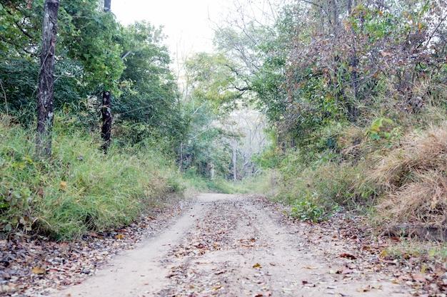 ジャングルへのオフロードの道