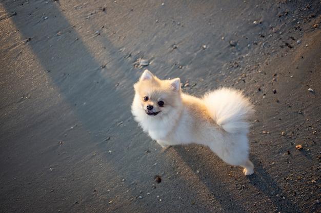 Милая бездомная собака на песке