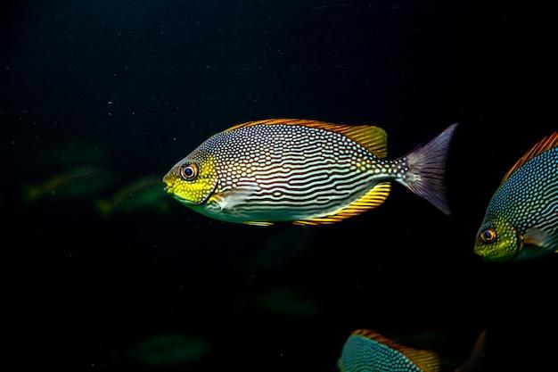 水中の海の水を泳ぐカラフルな魚
