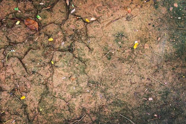 背景のジャングル土壌地面テクスチャ