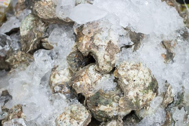 新鮮な魚介類の保存用カキを氷の上に置いておく