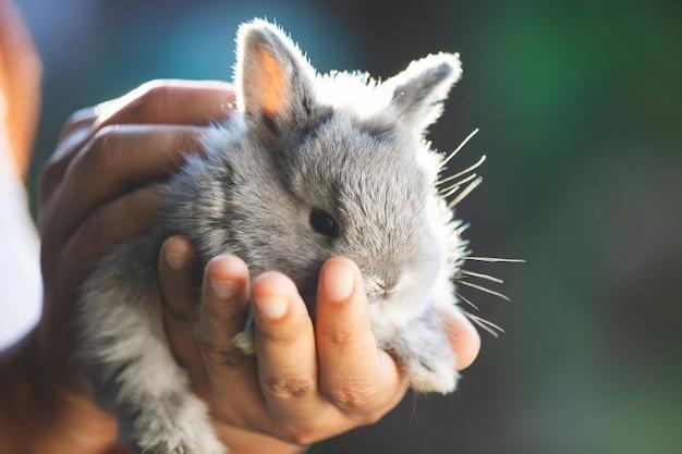 Милый маленький зайчик в руках