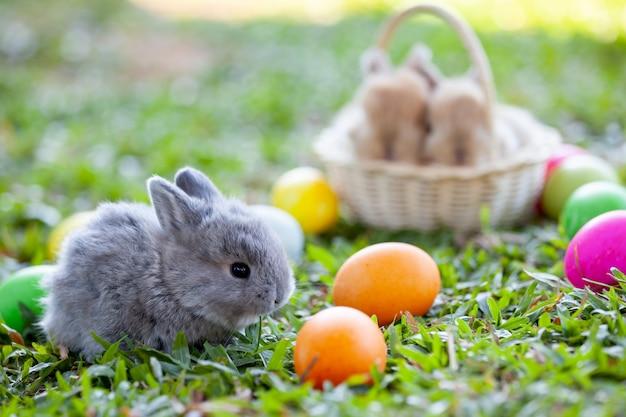 Милый маленький кролик и пасхальные яйца на лугу