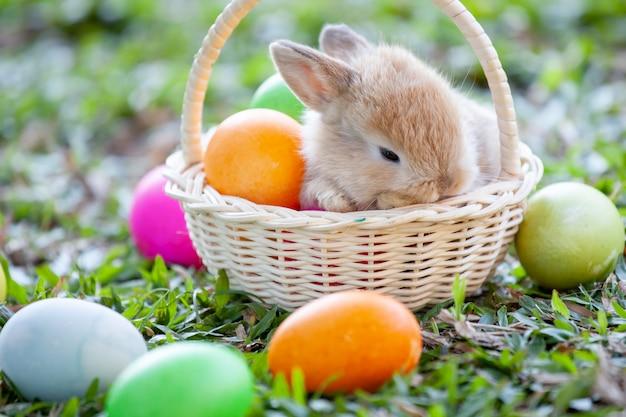 Милый маленький зайчик в корзине и пасхальные яйца на лугу
