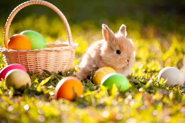 牧草地でかわいい小さなウサギとイースターエッグ
