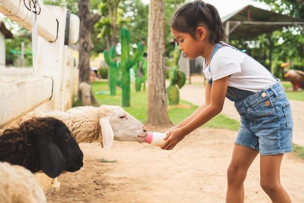 かわいいアジアの子女の子は動物園で小さな子羊に牛乳の瓶を供給しています。