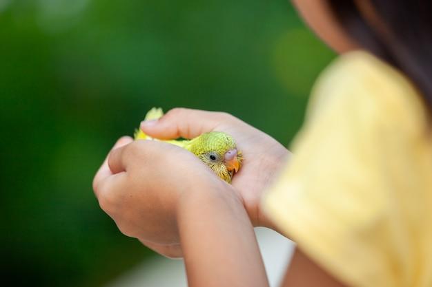 子供の手にかわいい小さなバッジー鳥。アジアの子供の女の子は彼女のペットの鳥と穏やかに遊ぶ