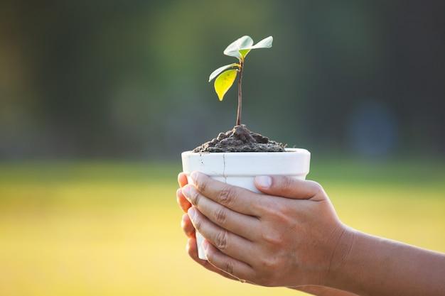 Женщина рука молодой саженец в горшке для подготовки растений на земле