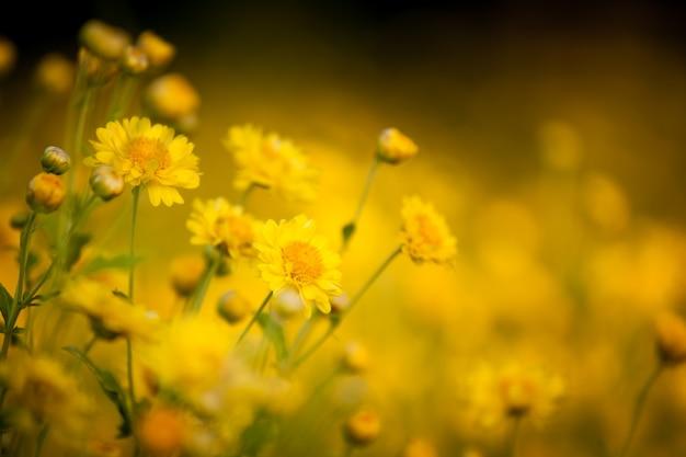 フィールドで美しい黄色の花