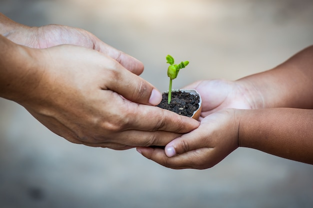 両親と子供卵の殻に一緒に地面に植物を準備するために一緒に若い樹を保持する手は、世界の概念を保存