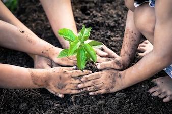 子供と親が一緒に若木を植える