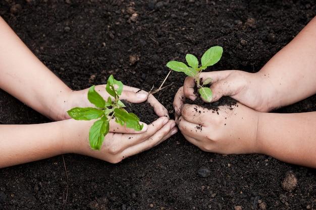 子供たちは、世界の概念を保存するために一緒に黒い土壌に若い木を植える手