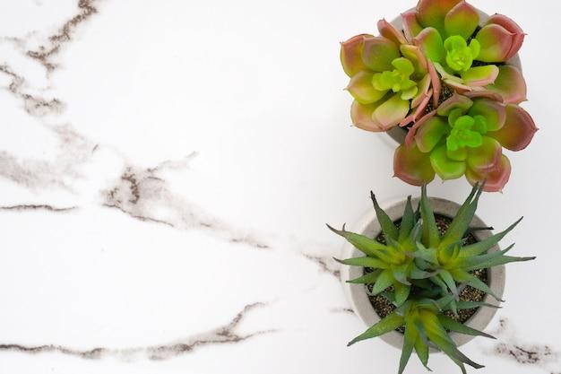 Сочные растения на фоне белого мрамора