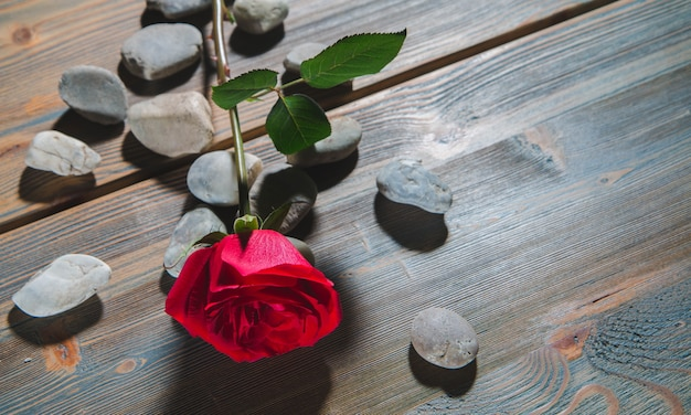 Красные розы и камни на столе из коричневого дерева.