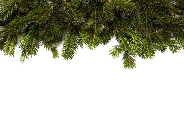 モミの木の枝