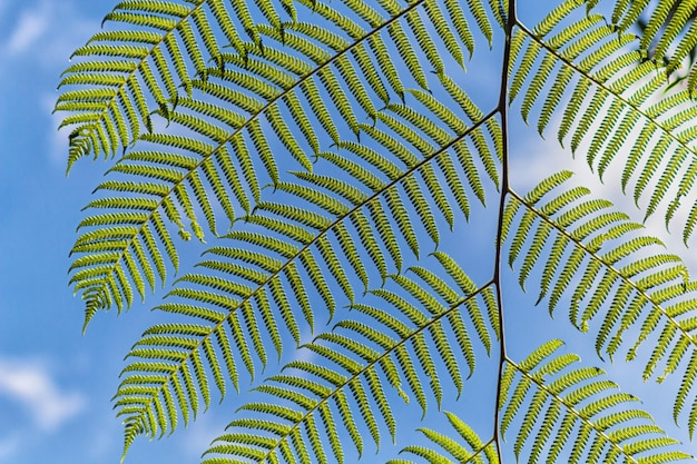 装飾的な鮮やかな緑色のシダの葉、空の背景