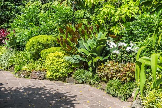 Тропические растения с каменной дорожкой