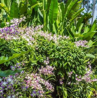 熱帯植物と紫の蘭の花と白