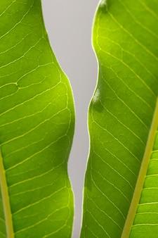 Молодые светло-зеленые листья тропического растения с солнечным светом в ботаническом саду