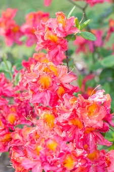 植物園で開花する真珠虫