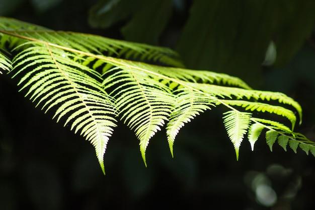 観賞用の明るい緑のシダの葉