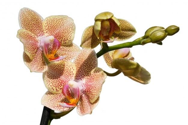さまざまな色の美しい蘭。