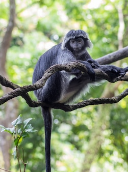 木の枝に白黒猿