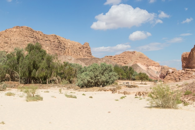 砂漠、赤い山、岩、青い空のオアシス。エジプト、シナイ半島。