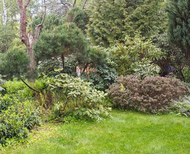 庭の針葉樹:トウヒ、イチゴ、松、モミ、ジュニパー
