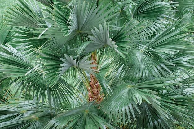熱帯のヤシの葉、濃い緑の葉、自然の背景