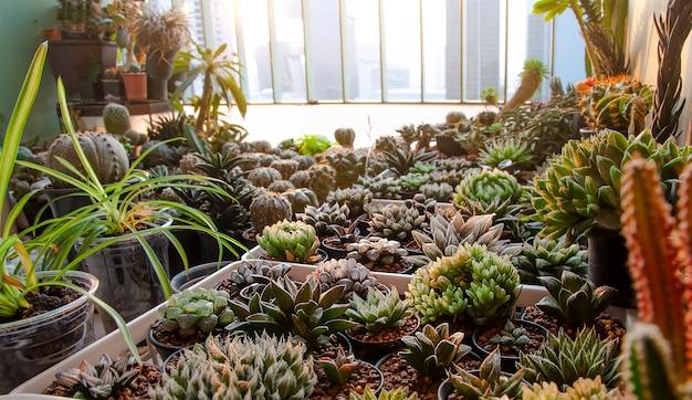 バルコニー付きマンションでの様々なサボテンと多肉植物の収集