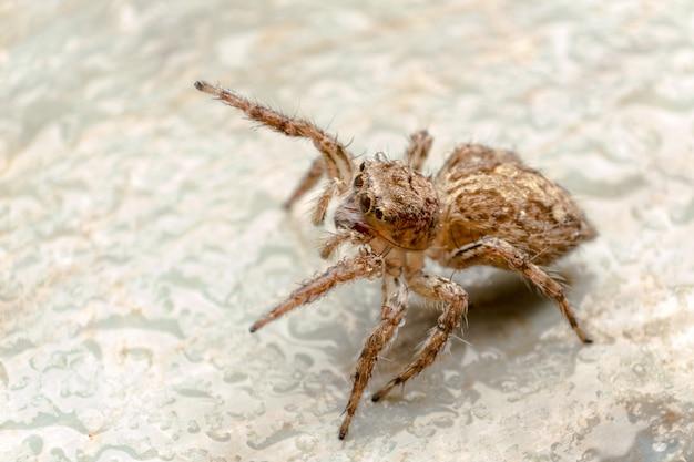 クモがジャンプし、腕を上げ、敵を追いかけます。