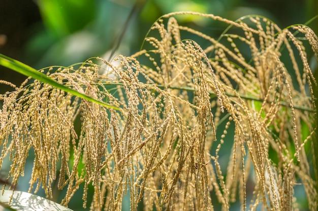 Цветок бамбуковой травы